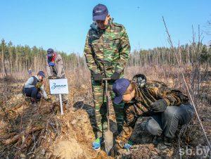 Лес под названием «Знамя юности» посадили в Негорелом в минувшие выходные