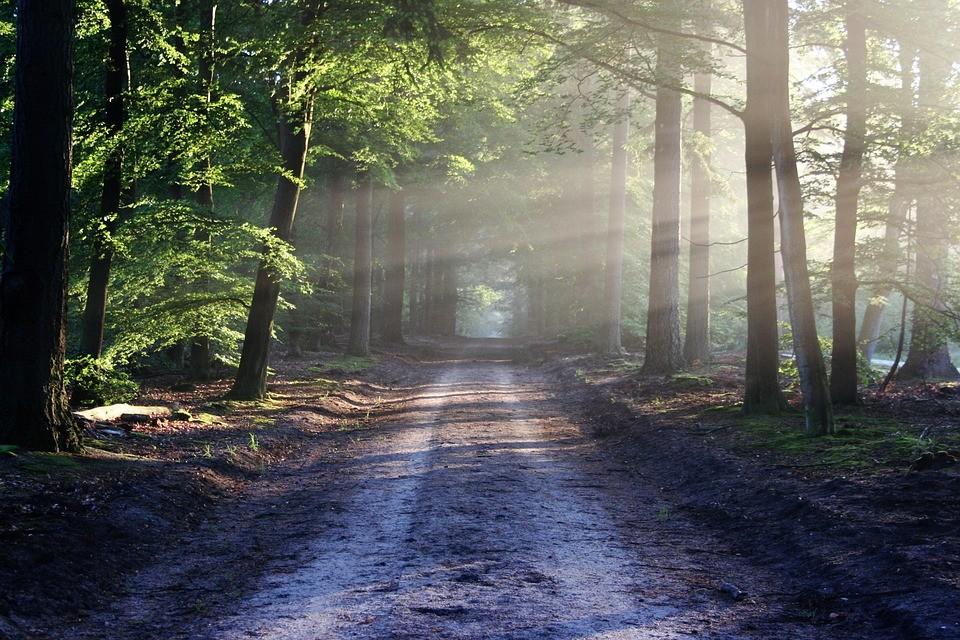 Что стоит знать про День работников леса