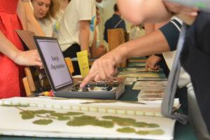 План мероприятий, посвященных профессиональному празднику «День работника леса 2020»
